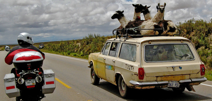 Mixed traffic species